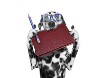 Dog in eyeglasses holding a book in his mouth and a pencil Royalty Free Stock Photography