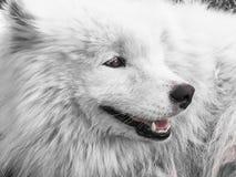 Dog eyes close-up stock image