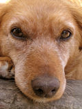 Dog face. Close up shot stock image