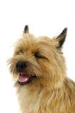 Dog face Stock Image