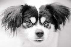 The dog face Royalty Free Stock Image