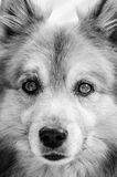 Dog portrait. Cute face of a dog Royalty Free Stock Images