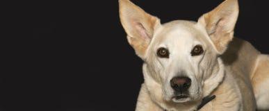 Dog Face Stock Photos