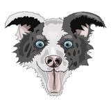 Dog face breed border collie vector illustration