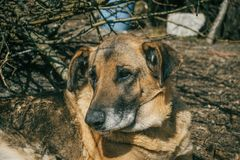 Dog face without breed in a rural village Stock Photo