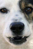 Dog face royalty free stock images