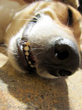Dog face (7) close-up Stock Images