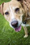 Dog face. Close up photo of dog face Stock Photo