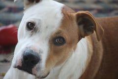 Dog face closeup. Dog face. Extreme close up stock photo