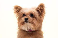 Dog Face Closeup Stock Image