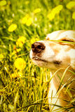 Dog face Royalty Free Stock Photos