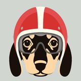 Dog face in motorcycle helmet vector illustration flat. Style Royalty Free Stock Photography