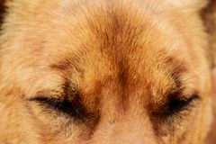 Dog face pet stray shelter close up. Dog face pet stray shelter close up Stock Photo