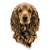 Dog face sketch vector graphics. Dog breed Cocker Spaniel face in a Santa hat, sketch vector graphics color picture Stock Image