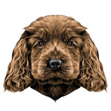 Dog face sketch vector graphics. Dog breed Cocker Spaniel face in a Santa hat, sketch vector graphics color picture Royalty Free Stock Photo