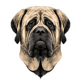 Dog face sketch vector graphics Stock Images