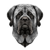 Dog face sketch vector graphics Royalty Free Stock Image