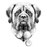 Dog face sketch vector graphics Royalty Free Stock Photography
