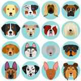 Dog faces set with circle. Cute dog faces set with blue circle Stock Photo