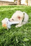 A dog with fake bouquet of flowers royalty free stock photo