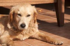 Dog on fall sun lit porch floor Stock Image