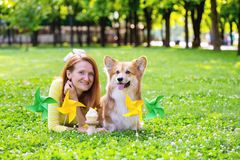 Dog in the family. Birthday off beautiful corgi fluffy on green lawn and colorful party flags on the background royalty free stock photo