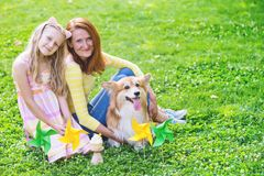 Dog in the family. Birthday off beautiful corgi fluffy on green lawn and colorful party flags on the background stock photos