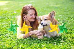 Dog in the family. Birthday off beautiful corgi fluffy on green lawn and colorful party flags on the background royalty free stock image