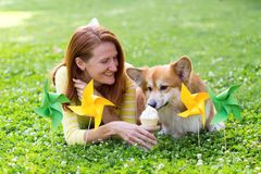 Dog in the family. Birthday off beautiful corgi fluffy on green lawn and colorful party flags on the background stock image