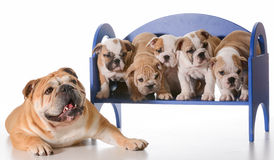 Dog family Stock Photos