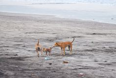 Dog Family expressing Love on a Beach... stock photos