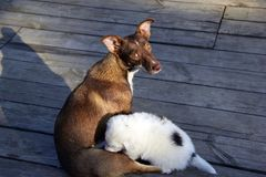 Dog family Royalty Free Stock Photos