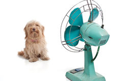 Dog with fan Royalty Free Stock Images