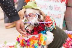 Dog fancy Stock Photo