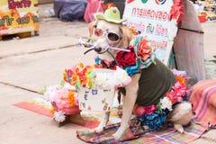 Dog fancy Royalty Free Stock Image