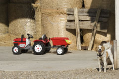 Dog and a farm tractor. In the vineyards Royalty Free Stock Photos
