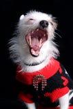 The dog fashion stock photo
