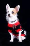 The dog fashion Royalty Free Stock Photo