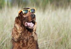 Dog fashion Royalty Free Stock Image