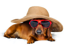 A dog in a fashionable hat Stock Images