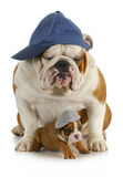 Dog father and son Stock Photos
