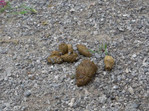 The Dog feces. Dog feces on the floor of gray stone taken straggle Royalty Free Stock Images