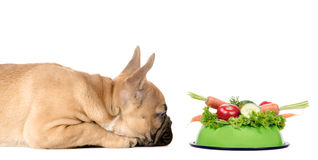 Dog with a feeding bowl full of vegetables Stock Photo
