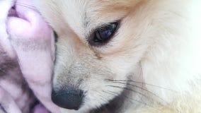 Dog feel sleepy. Dog's face feel sleepy Royalty Free Stock Photo