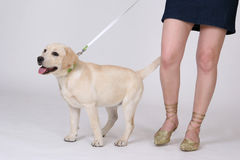 Dog and feet Royalty Free Stock Image