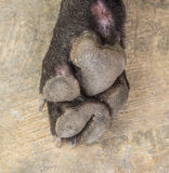 Dog feet and legs Royalty Free Stock Photography