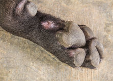 Dog feet and legs Royalty Free Stock Image