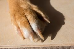 Dog feet and legs wooden surface. Close up image of a paw of homeless dog. skin texture. Resting dog`s paw close up.  stock images
