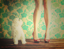 Dog and female legs. White Maltese dog and ladies legs. Antique wallpaper background royalty free stock images