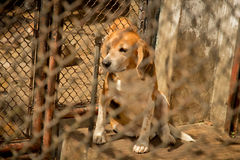 Dog and fence. Dogs Shelter Royalty Free Stock Image